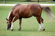 Free Horse Royalty Free Stock Photo - 1036145