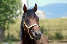 Free Stallion Stock Images - 1036154
