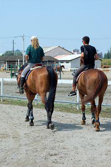 Free Horses Royalty Free Stock Image - 1036156