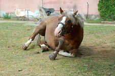 Free Horse Royalty Free Stock Photos - 1036228