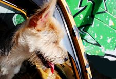 Free Dog Stock Photo - 1036930
