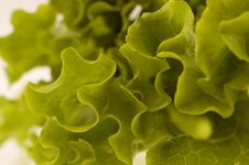 Free Salad3 Royalty Free Stock Photography - 1038307
