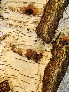 Free Golden Tree Bark On Old Tree Royalty Free Stock Photo - 1038325