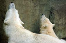 Free Bear Stock Photography - 1038692