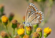 Free Beautiful Butterfly Stock Photos - 1038973