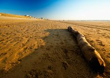 Driftwood On The Beach Stock Image
