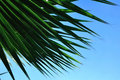 Free Palm Leaves Royalty Free Stock Photos - 10308698