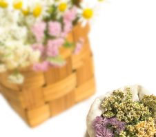 Free Herbal Medicine Stock Images - 10300384