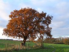 Free Tree In Autumn Royalty Free Stock Photo - 10302415