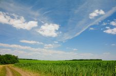 Free Clouds Above The Corn Field Stock Photos - 10303213