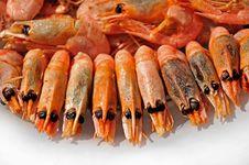 Free Shrimp Stock Images - 10303384