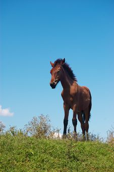Free Brown Horse Grazing Royalty Free Stock Image - 10305556
