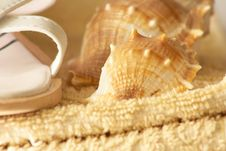 Free Shell On Towel Royalty Free Stock Photos - 10306418