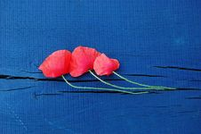 Free Three Wild Red Poppies On A Wooden Board Royalty Free Stock Photo - 10306695