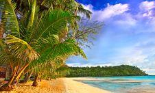 Free Tropics Royalty Free Stock Photo - 10306995