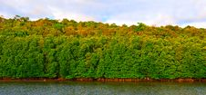 Free Green Forest Near Tropical Lake Royalty Free Stock Images - 10307419