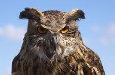 Owlet Stock Photos