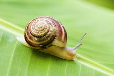Free Snail On Leaf Royalty Free Stock Image - 10310106