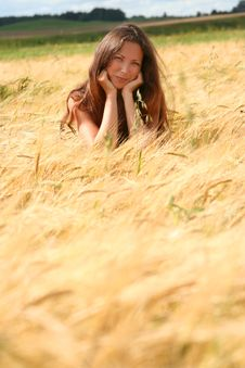 Free Golden Field Stock Photo - 10311140