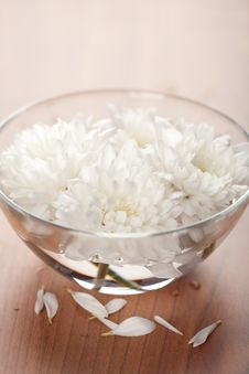 Free White Flowers Floating In Bowl Royalty Free Stock Photography - 10311677