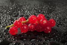 Free Redcurrant With Water Drops Over Black Royalty Free Stock Photos - 10312358
