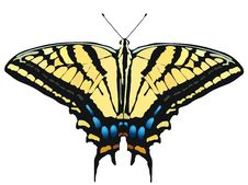 Free Vector Illustration Of Butterfly Royalty Free Stock Photo - 10312565