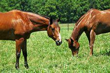 Free Horses Grazing Stock Image - 10314131