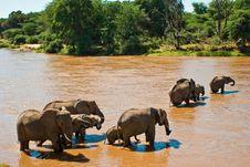 Elephant Family Crossing The River Royalty Free Stock Photo