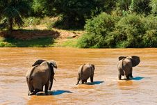Free Elephant Family Crossing The River Royalty Free Stock Photo - 10314295