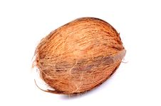 Free Hairy Coconut Stock Photo - 10315110
