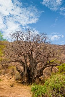 Free Landscape With A Baobab Tree Royalty Free Stock Images - 10315179