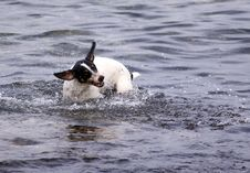 Free Dog Shake Royalty Free Stock Photo - 10315625