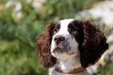 Free Injured Dog Royalty Free Stock Images - 10315819