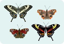 Four Butterflies Royalty Free Stock Photography