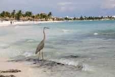 Free Heron On The Beach Stock Photos - 10316043