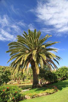 Free Mediterranean Palm Royalty Free Stock Image - 10316086