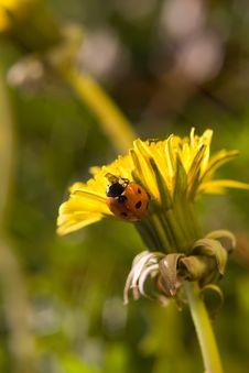 Free Ladybug Stock Images - 10317274