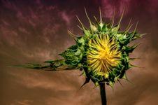 Free Sunflower Stock Photography - 10317302