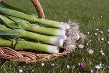 Free Bunch Of Fresh Leeks Produce Stock Photography - 10317882