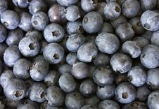 Free Bilberries Stock Images - 10319004