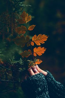 Free Autumn, Fall, Hands, Holding Stock Images - 103100314
