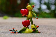 Free Vertebrate, Frog, Amphibian, Tree Frog Royalty Free Stock Photos - 103144808