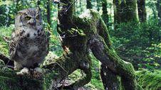 Free Owl, Tree, Fauna, Bird Stock Photos - 103146683