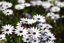 Free Flowers Stock Image - 103162181