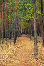 Free Scene In The Forest Stock Photos - 10321063