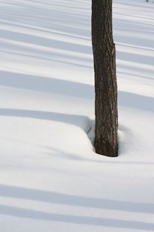 Free Tree And Snow Stock Image - 10320721