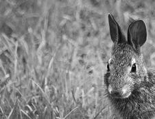 Free Bunny Royalty Free Stock Photos - 10320758