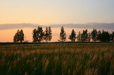 Free Summer Landscape In The Evening Royalty Free Stock Photography - 10320807