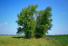 Free Tree And Sky Stock Photography - 10320922
