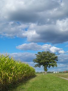 Free Farm Field And A Lonely Tree Royalty Free Stock Photography - 10322147